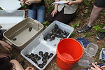 Turtles Ready to be Released