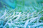 Morning frozen grass