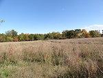 Late Summer Foliage Marais des Cygnes National Wildlife Refuge