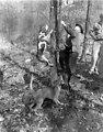 Coon Hunt (Raccoon Hunting) Oak Ridge 1947
