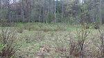 New England cottontail habitat