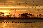 Photo of the Week - Sunrise at Chincoteague National Wildlife Refuge (VA)