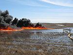 In situ Burn on Wetland