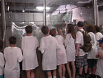 Kids looking at adult salmon in hatchery