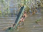 Flood damage at Prime Hook