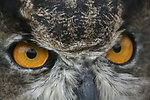 Photo of the Week - Great Horned Owl at John Heinz National Wildlife Refuge, PA