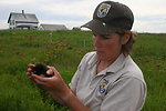 FWS Worker With Razorbill Chick