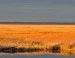 Marsh of Gold - Horicon National Wildlife Refuge