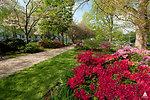 Azaleas on th Capitol Grounds