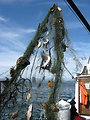 Derelict fishing gear with animal carasses found by the USFWS Puget Sound Coastal Program. Credit USFWS Joan Drinkwin