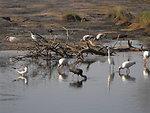 Birds feeding off Swan's Cove Trail