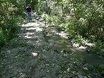 Hurricane Damage at Wallkill River National Wildlife Refuge August 30, 2011