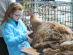 Girl and Bear Skin