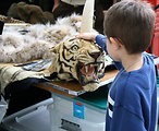 Petting Tiger, Hidden Dragon