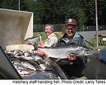 Handling Adult Coho Salmon