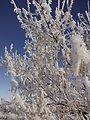 Frosty Morning on Bowdoin NWR