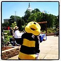 Frankie the Bee of the US Forest Service educates about endangered animals and plants at US Botanic Garden.