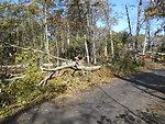 Fallen trees at Target Rock National Wildlife Refuge