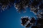 Photo of the Week - Winter shot at John Heinz National Wildlife Refuge