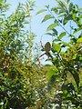 Photo of the Week - Spider at John H. Chafee National Wildlife Refuge, RI