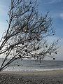 Photo of the Week - Shell Tree at Chincoteague National Wildlife Refuge, Virginia