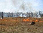 Burning to Promote Wildlife Habitat
