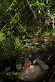 Thick habitat