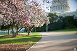 Spring at the U.S. Capitol