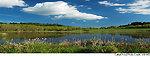 Cattail Pond - William L Finley NWR