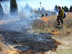 Prescribed burn at Conscience Point