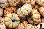 Background pumpkins 2