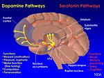 Brain pathways chart