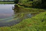 July 12, 2013 - Sassafras River, VA Algal Bloom