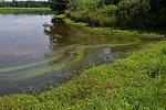 July 12, 2013 - Sassafras River, VA Algal Bloom