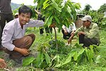 Local populations benefit from new cocoa crop techniques and market access.