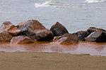 June 4, Oil washing ashore at Grand Isle State Park, La