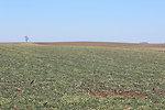Ross Bremmer crop landscape