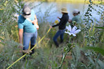 Environmental managers survey last year's riverbank plantings
