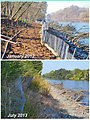 Eighteen months of growth along a lower American River bank