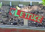 Gardening Blog Photo 2