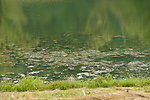 Algae bloom on farm pond. North western West Virginia. 2012 USEPA photo by Eric Vance