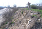 Erosion on Kings River levee