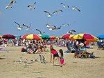 Feeding seagulls, Texas