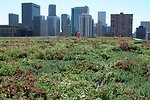 A Green Roof in the Heart Denver