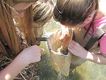 Student pointing out a macroinvertebrate