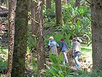 TrailDay trail walkers
