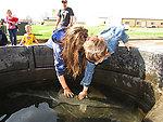 Petting Tank
