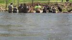 Students drive fish into a seine