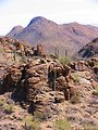Saguaro cactus in the Gates Pass area of Arizona