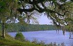 Apalachicola River near Ft. Gadsden2